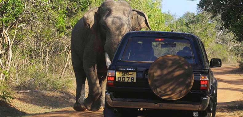 Wildlife safari in Sri Lanka
