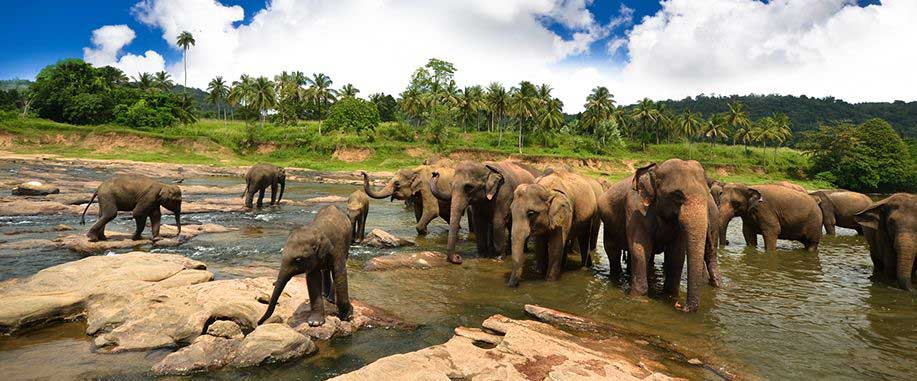 Sri Lanka wildlife parks