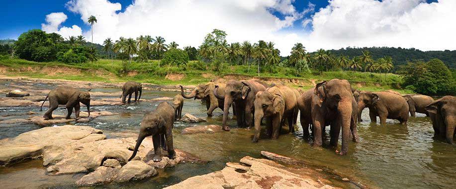Sri Lanka wildlife parks