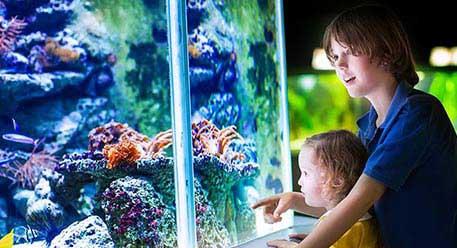 Botanical and Zoological Gardens
